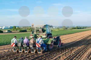 Agriculture – tractor sowing salad - franky242 photography