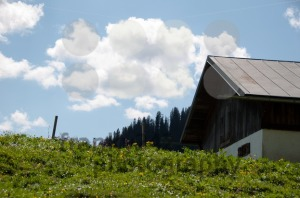 Alpine-Pasture2