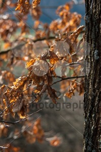 Autumn In Forest - franky242 photography