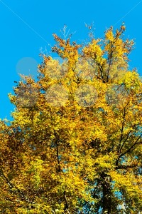 Autumn foliage against blue sky - franky242 photography