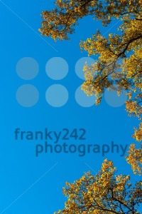 Autumn leaves against blue sky - franky242 photography