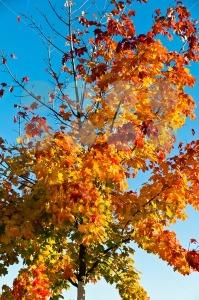 Autumn-leaves2