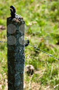 Barbed Wire Fence - franky242 photography