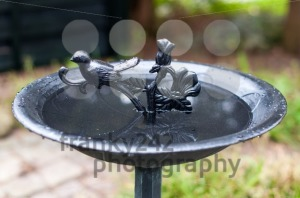 Birdbath - franky242 photography