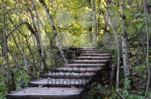 Boardwalk-in-forest-autumn