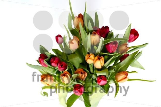 Bouquet-of-tulips-on-white-8211-horizontal