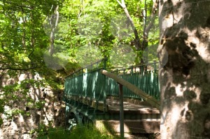 Bridge In The Wood - franky242 photography