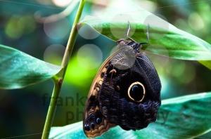 Butterfly - franky242 photography