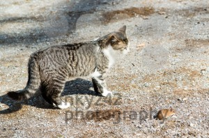 Cat and mouse - franky242 photography