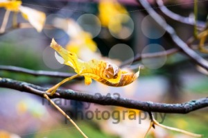 Chestnut in autumn - franky242 photography