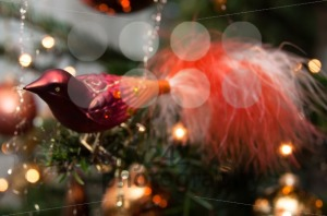 Christmas Decoration - franky242 photography