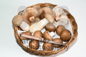 Collected Mushrooms - franky242 photography