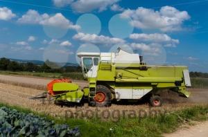 Combine-harvesting-corn1