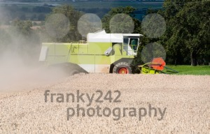 Combine-harvesting-corn2