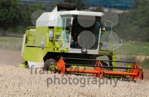 Combine-harvesting-corn3