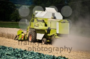 Combine-harvesting-corn4