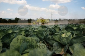 Combine-harvesting-corn5