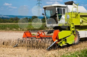 Combine-harvesting-corn6