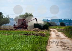 Combine-harvesting-corn7