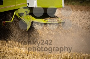 Combine-harvesting-corn8