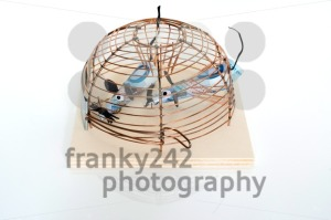 Conceptual: Euro Bills trapped in mouse-trap - franky242 photography