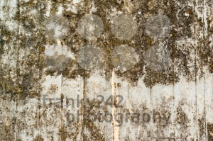 Concrete wall with lichen and moss - franky242 photography