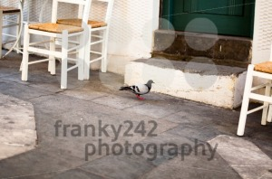 Cozy greek taverna with dove - franky242 photography