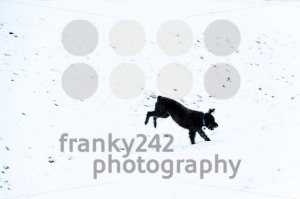 Dog jumping in snow - franky242 photography