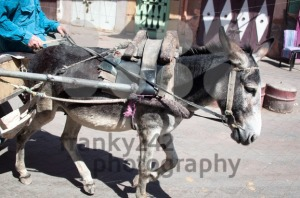 Donkey Carriage - franky242 photography