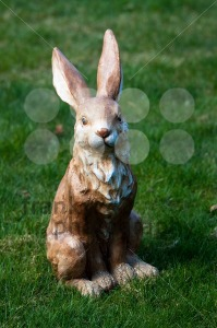 Easter Bunny - franky242 photography