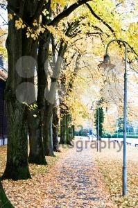 Fall-avenue