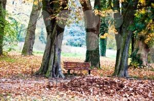 Fall-scenery