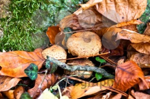 Fall-scenery-with-mushrooms