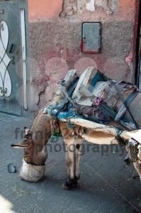 Feeding The Donkey - franky242 photography