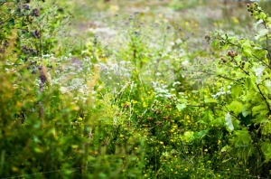 Field Of Wild Flowers - franky242 photography