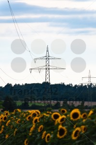 Fields-and-power-poles1