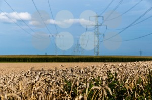 Fields-and-power-poles3