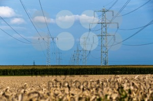 Fields-and-power-poles4