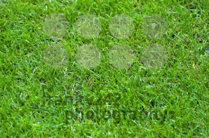 Football-Stadium-Grass