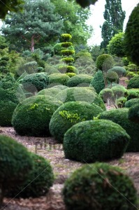 Garden Landscape. Topiary - franky242 photography