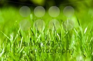 Green-Grass1