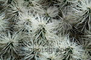 Green and White Cactus - franky242 photography