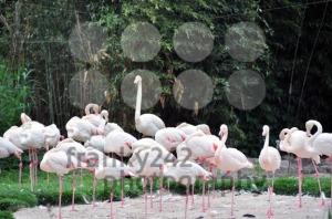 Group-of-flamingos