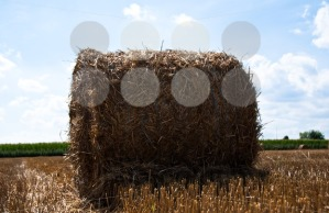 Hay-bale-on-freshly-harvested-fields1