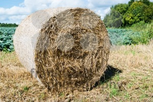 Hay bales - franky242 photography