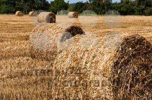 Hay-bales-on-freshly-harvested-fields