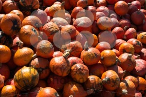 Heap of pumpkins - franky242 photography