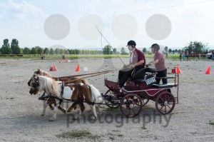 Horse Carriage Competition - franky242 photography