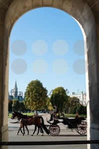 Horses and carriage, Vienna - franky242 photography