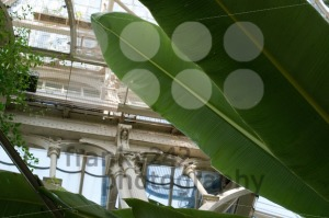 Inside Beautiful Old Greenhouse - franky242 photography